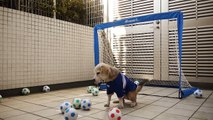 Dog Soccer Seems Like A Fun Sport