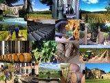 Blue Side - Spécialiste transactions achat vente propriétés viticoles - Provence - Languedoc