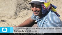 17-million-year-old Whale Skull Helps Place Humanity's First Steps