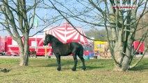 A Woippy, les animaux du cirque font déjà leurs numéros