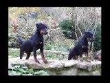 teaser1244969_jagd-terrier-jack-russel-arcimbold_.mp4