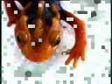Objectif découverte - Les amphibiens, les poissons