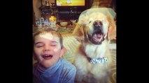 """Conoce a """"Smiley"""" el perro terapeuta que nació sin ojos"""