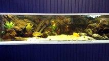 Aquarium 1200 litres - cichlidés Amérique Centrale - club BAAC Brest