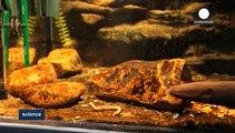 Los misterios de las anguilas eléctricas