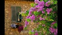 Under the Tuscan Sun - Sotto il sole della Toscana
