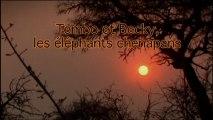 Tembo et Beky, les éléphants chenapans