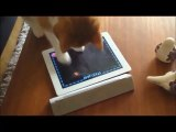 LOL Funny Compilation   Funniest Cat Compilation Ever   Funny Animals   Funny Animal Videos