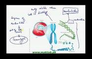 Class 12 -Biology-Genetics-Lec1-Introduction, Genes, Alleles and Gene Pool