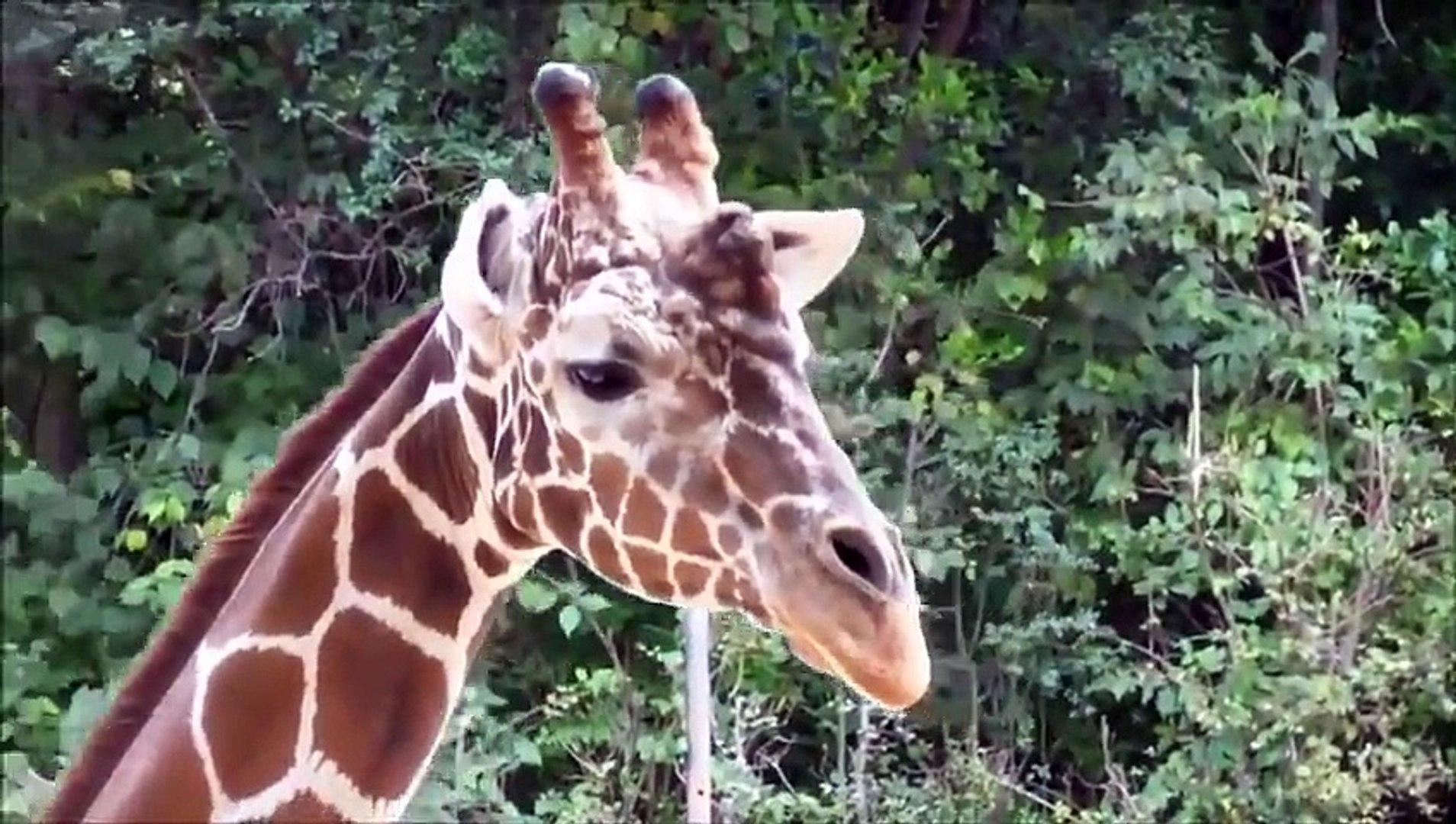 LOL Hot animal mating crazy videos funny video 2014 Part34 wild sex animal sex animal