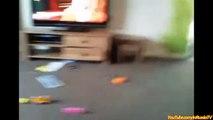 Gatos Divertidos Compilación De Videos Graciosos Con Gatos Siempre Divertidos Videos Divertidos Animales Graciosos Anima
