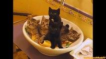 VIDEOS DIVERTIDOS: Funny Cats Funny Cat Videos Divertidos Animales Fallar Compilación Gatos Salto