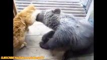 animales divertidos,gatos divertidos compilación de 2014,funny cat videos,funny top gatos locos,divertidos vide