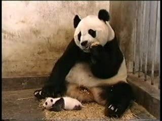 Petit Panda Eternue, Maman a peur