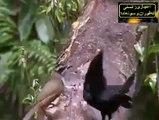 Qudrat ka kamal amazing bird