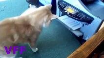 Cat Fail Compilation Videos Epic Funny Cats Jump Fail 2015 Funny Cat Fails No 145