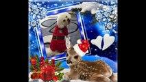 Bichons Rock (Facebook Group)  - Bichon Frise Christmas & Holiday Photos