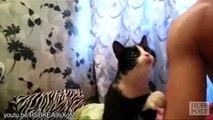 Des chats demandent des câlins... Trop mignon!