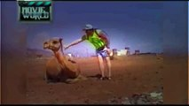 Funny Animals Funny Fail Videos Of Women Men And Animals Compilation