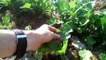 [Permaterre] Potager en permaculture [3] Mai 2014