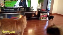 Cat Is Very Patient With This Dog!! ★ funny cats, cute cats, cute kitten, crazy cats, hilarious cats
