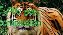 Funny animal compilation► Even exotic animals can be pets   Unusual pets compilation