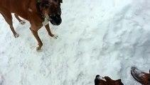 Un vieux chien joue un mauvais tour à un jeune chien