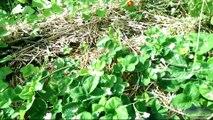 [Permaterre] Potager en permaculture [5] Juillet 2014