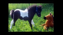 Horse: The First Jumping Of Baby Horses - Love animal