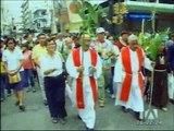 Desarrollan camapaña para evitar venta de la palma de cera en Guayaquil