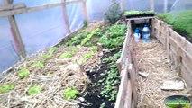 [Permaterre] Potager en permaculture [Mars 2015] #8