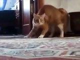 Gatos Possuídos ''endemoniados''
