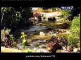 Jejak Jejak Misterius Misteri Manusia Berbulu Bermuka Anjing Hutan Sipariuk 30 Maret 2015