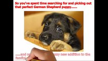 ***** How To Train A German Shepherd Puppy [ QUICKLY ] Potty Train A German Shepherd Puppy ;))