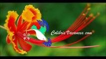 Colibris Vacances-vacances-ferme-bio-372