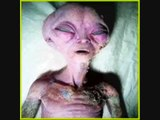 Alien Life (Pictures of Real Aliens) - ufo files - alien - files - area 51 files - extraterrestrial