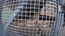 Caminito del Rey - After reconstruction _ EXCLUSIVE VIDEO