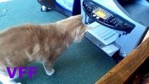 Cat Fail Compilation Videos   Epic Funny Cats Jump Fail 2015   Funny Cat Fails No 145 1