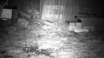 3 - Le printemps, les hérissons circulent dans le jardin ...