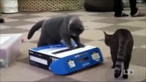 Funny cats videos talking 2015 | Funny Animals - Cats Funny Balloons Compilation, funny Animals 2015