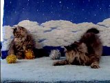 Dollface Doll Face Tabby Persian Kittens Playing