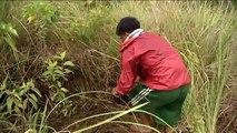 Situation des forêts du monde 2011: la régénération des forêts aux Philippines