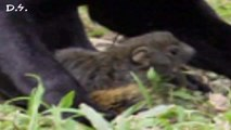Mother squirrel goes nuts and saves baby !