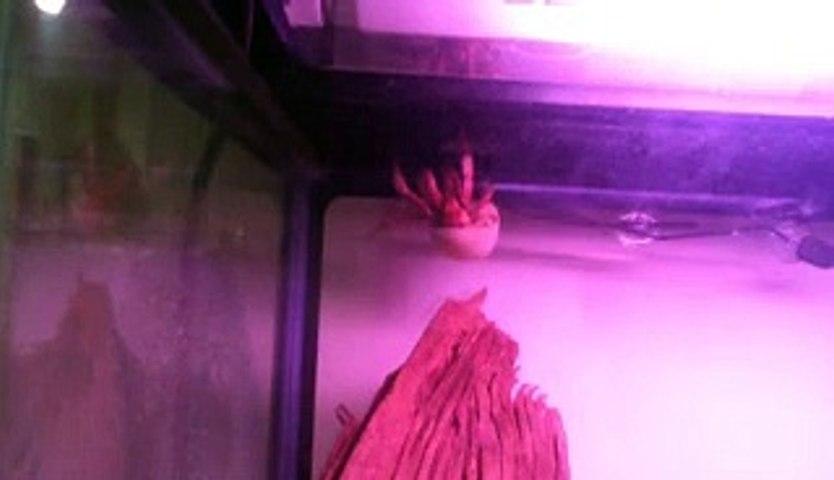 Crazy Crab Roof Walking