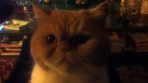 Ma cosa sta facendo questo gatto!