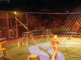 Panique Totale lors d'un Spectacle de Lions dans un Cirque