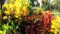 MARTINIQUE HORS DES PLAGES  Martinique, tu n'offres pas que les plages mais des paysages et une flore variée du nord au sud. La douceur et la joie de vivre des Antilles, la caresse des alizés en prime! Madinina tu sais t'offrir au visiteur!   Martinique,