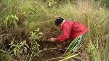Situación de los bosques del mundo 2011: regeneración de los bosques en las Filipinas