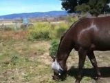 Are Mare Horses Moody - Gelding or Mare which is better - Rick Gore Horsemanship