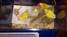 Un oiseau infirme est rejeté par ses parents dès sa naissance, mais la suite est magnifique!